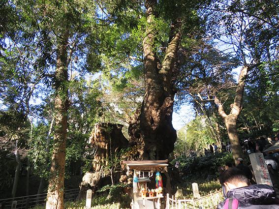 來宮神社2.jpg