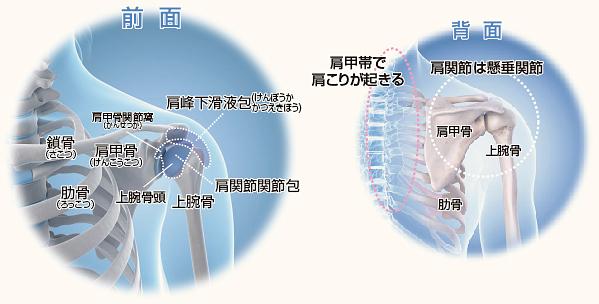 肩関節2.jpg