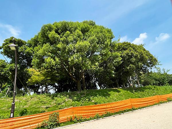 自然観察公園.jpg