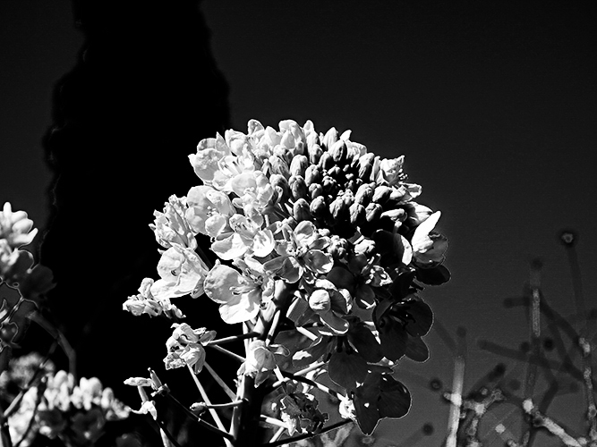 Lightroom白黒.jpg