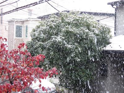 a初雪.jpg